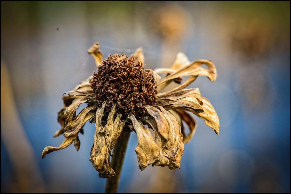dead-flowers-2